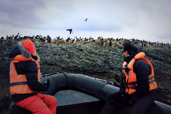 Skuas-y-pingüinos-en-los-is