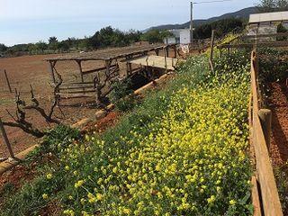 Perspectiva de la granja Can Pere Mussona