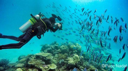 Barrera de coral 1-01 EDIT