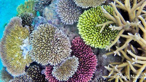 Barrera de coral 2-01 EDIT