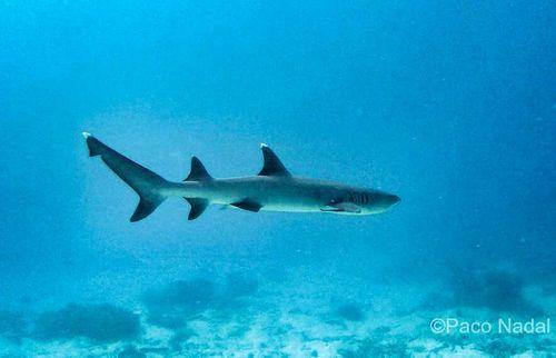 Tiburón, Australia-01 EDIT
