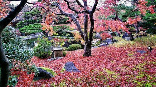 12. Diciembre, Japón.