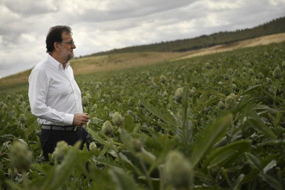 Rajoy alcachofas