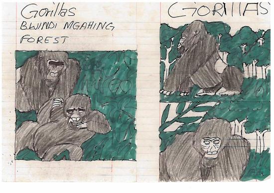 Ilustraciones libro niños de Nkuringo