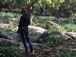 Jaime Roselló iniciando la recolección de trufas con sus perros