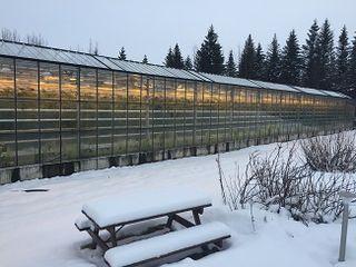 Vista exteriror del invernadero