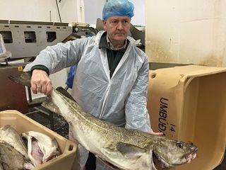 Gunnar Tómasson muestra un gran bacalao