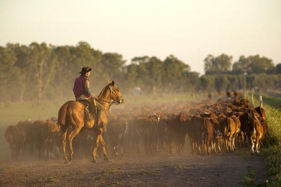 Gauchos a caballo -  Christian Guy