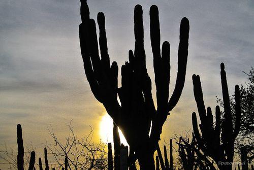 Baja California - Paco Nadal