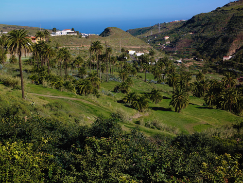 Palmeral Gran Canaria