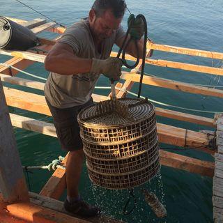 Cestas en las que durante seis meses se desarrollan las %22semillas%22 de ostras