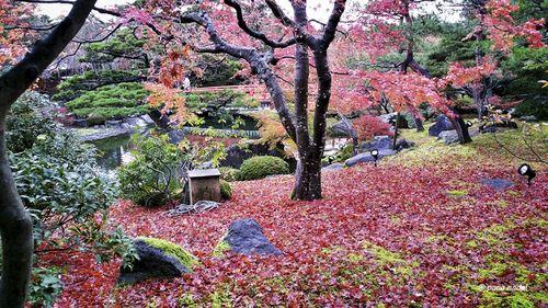 Otoño en Japón 5