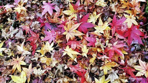 Manual de instrucciones para ver el otoño en Japón >> Paco Nadal >> El Viajero >> Blogs EL PAÍS