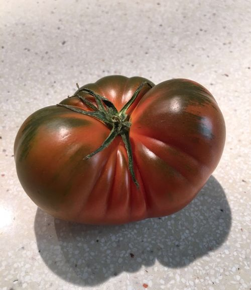 Presunto tomate RAF adquirido por Juan Luis Forcada en San JUan (Alicante)
