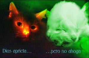 Gatico_1