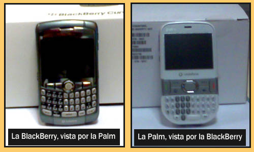 Blackberry_y_palm